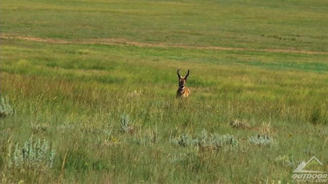 Sticking with it to stick pronghorn