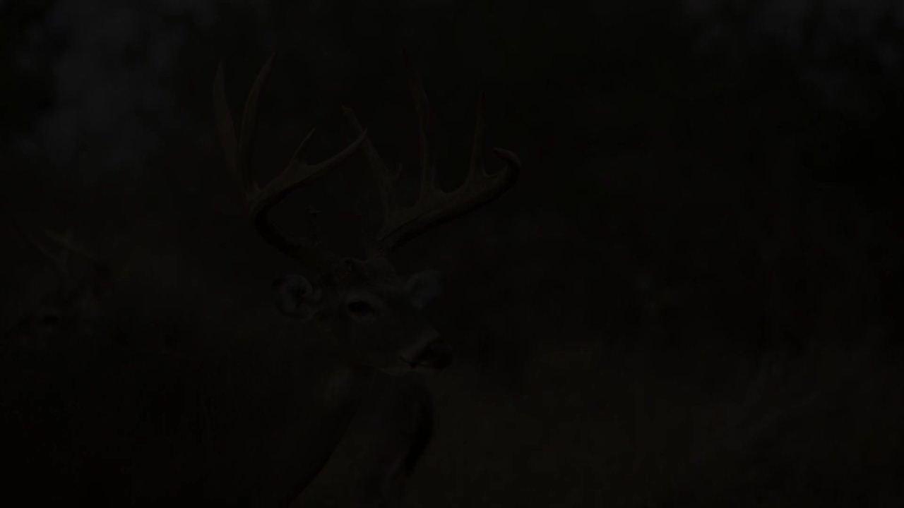 Bucks of Tecomate Thursdays 11pm ET