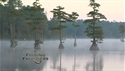 http://media.outdoorchannel.com/outdoorchannel/31/709/FordsFishingFrontier_Ep1201_Teaser_125x71_2179991180_125x71.jpg