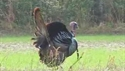 http://media.outdoorchannel.com/outdoorchannel/414/317/Hunt_Southernstyle_080104_125x71_1892226283_125x71.jpg