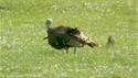 http://media.outdoorchannel.com/outdoorchannel/419/463/AdventuresAbroad112_30542_ATasteForTurkey_1500k_125x71_1822740443_125x71.jpg