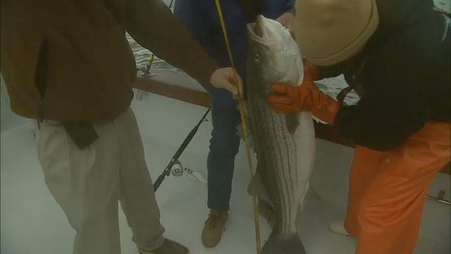 Virginia Beach Striper Catch - Bill Dance Saltwater