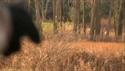 http://media.outdoorchannel.com/outdoorchannel/419/465/BoneCollector_021009_DeerSanctuary_1500k_125x71_125x71.jpg