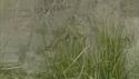 http://media.outdoorchannel.com/outdoorchannel/419/465/MountainLionTitled_1500k_125x71_125x71.jpg