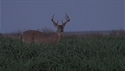 http://media.outdoorchannel.com/outdoorchannel/47/432/TecoWT_ClintMcCoy_125x71_2196204380_125x71.jpg