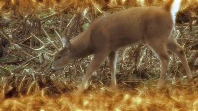 http://media.outdoorchannel.com/outdoorchannel/486/71/GunNuts_Ep5_GFG_DeerShotguns_high_640x360_640x360_52724291914.jpg