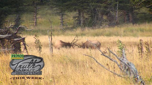 Episode 1606: Primos TRUTH About Hunting sneak peek  -