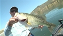 http://media.outdoorchannel.com/outdoorchannel/586/962/CA_Largemouth_Swps_X02_web_125x71_1688192905_125x71.jpg