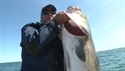 http://media.outdoorchannel.com/outdoorchannel/586/963/NE_Striper_M3_Swps_X02_web_125x71_125x71.jpg