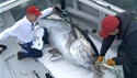 http://media.outdoorchannel.com/outdoorchannel/586/963/PEI_Tuna_DB_M3_Prt2_Swps_X02_web_125x71_1688192914_125x71.jpg