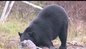 http://media.outdoorchannel.com/outdoorchannel/603/916/OutdoorsInTheHeartland_NA_NA_BobsBlackBear_125x71_125x71.jpg
