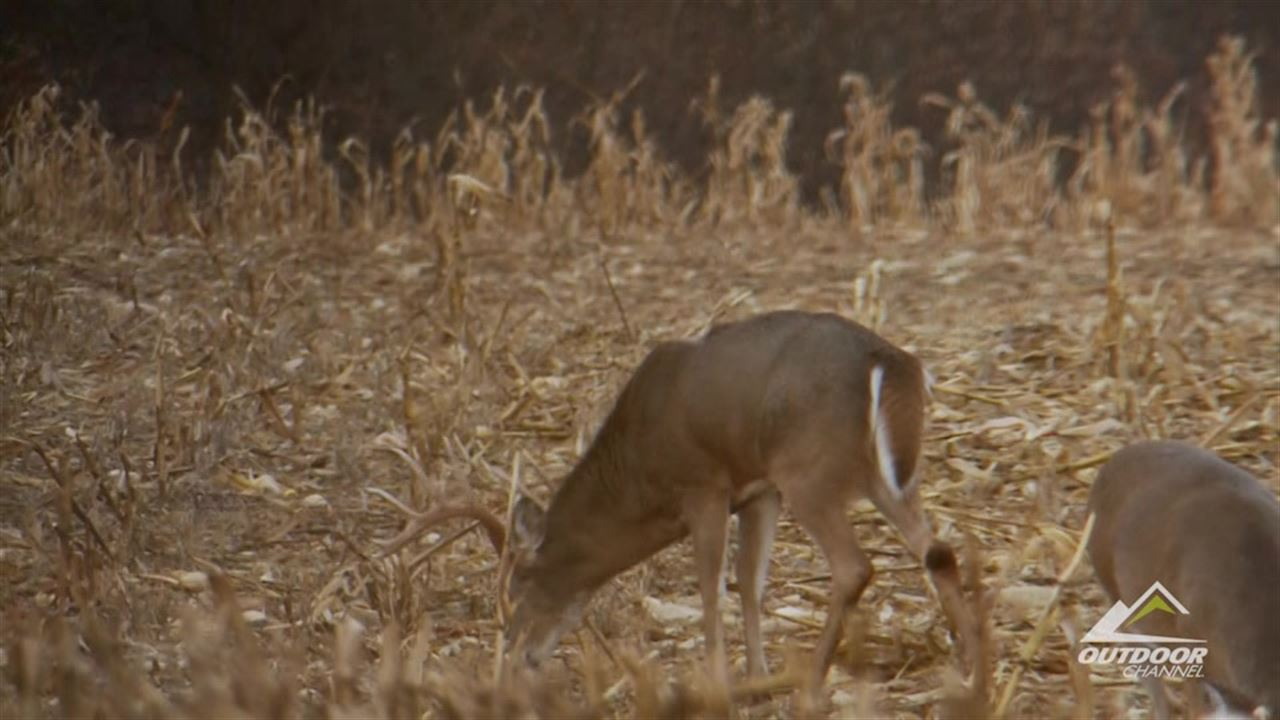 Preview the episode of Whitetail Freaks for the week of 4/25/16