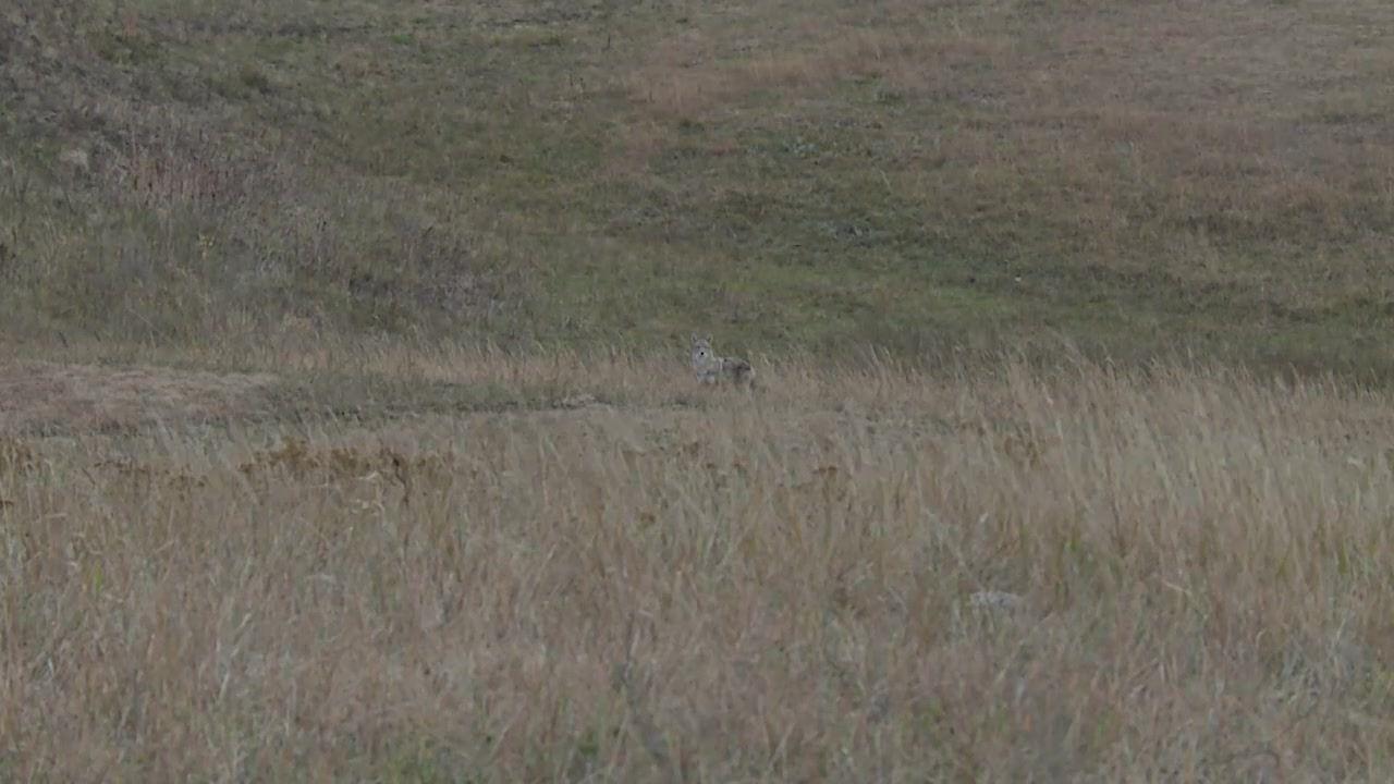 Episode 1605: Primos TRUTH About Hunting sneak peek -