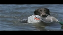 http://media.outdoorchannel.com/outdoorchannel/732/394/Managing_Your_Dogs_Joint_Pain_125x71_1841386162_125x71.jpg