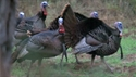 http://media.outdoorchannel.com/outdoorchannel/942/143/TeamTrophyQuest_Turkey_2011_TurkeyHunt_125x71_2060701302_125x71.jpg